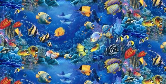 fish-the-sea-colorful_775825