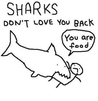 shark nom nom